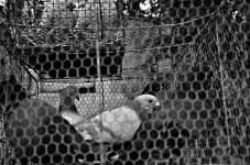 Cage Un-Free